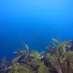 Reef 3