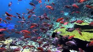 diving batu bolong